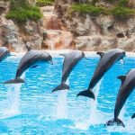 آکواریوم دلفین ایروان