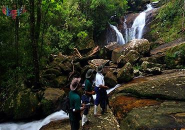 جنگل سریلانکا