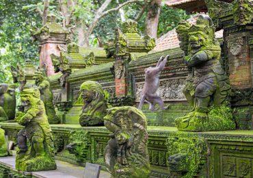 پارک جنگلی میمون ها در تور بالی