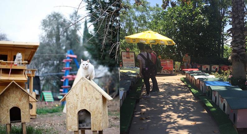 پناهگاه گربه (cat sanctuary) یک روز در آنتالیا